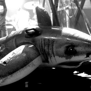 Requin Chagrin